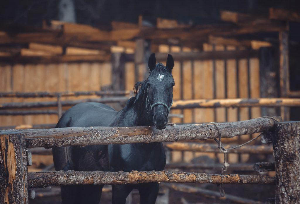 alimentacion para caballos