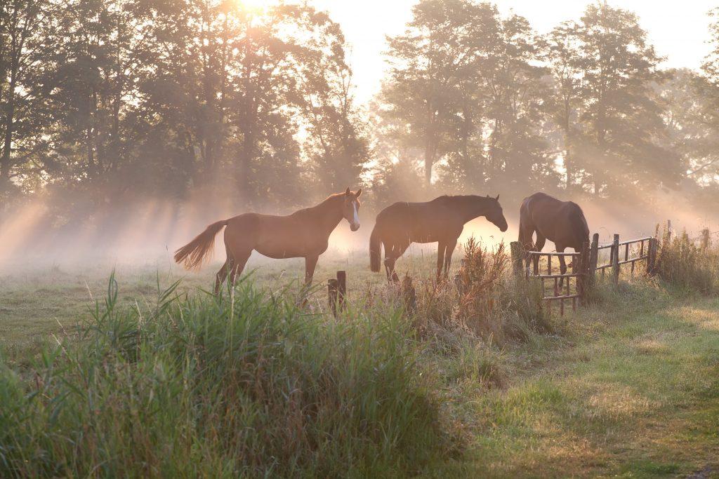 el mejor pienso para caballos barato