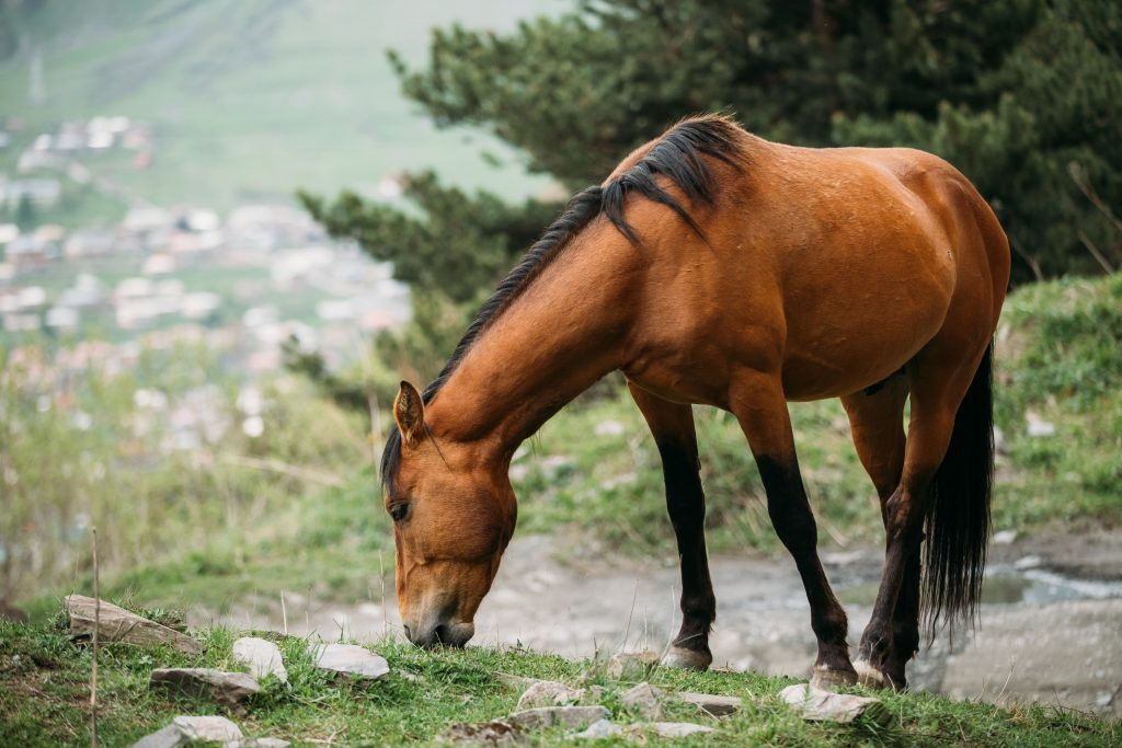 pienso caballos