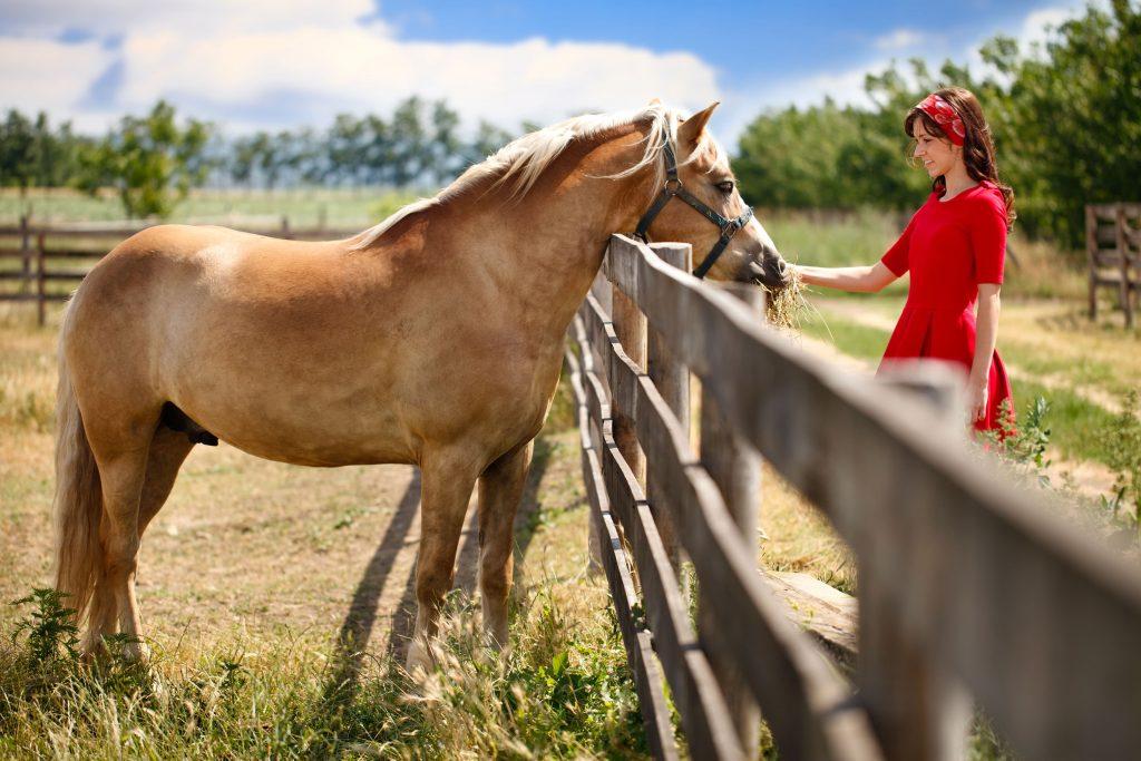 pienso para caballos pavo
