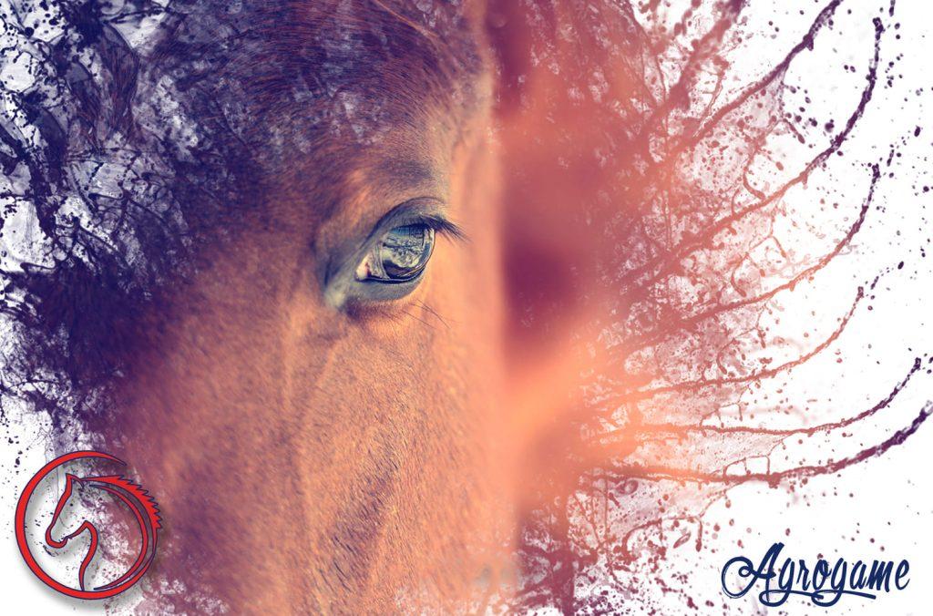 Algunos consejos para elegir el nombre de tu caballo