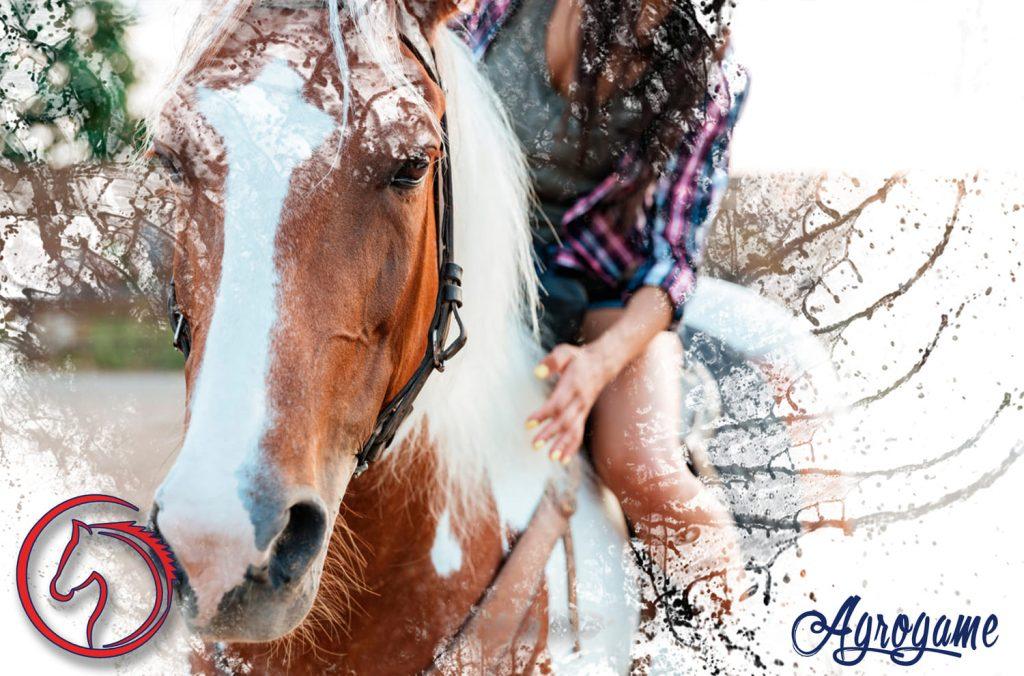 Pastores eléctricos para los caballos