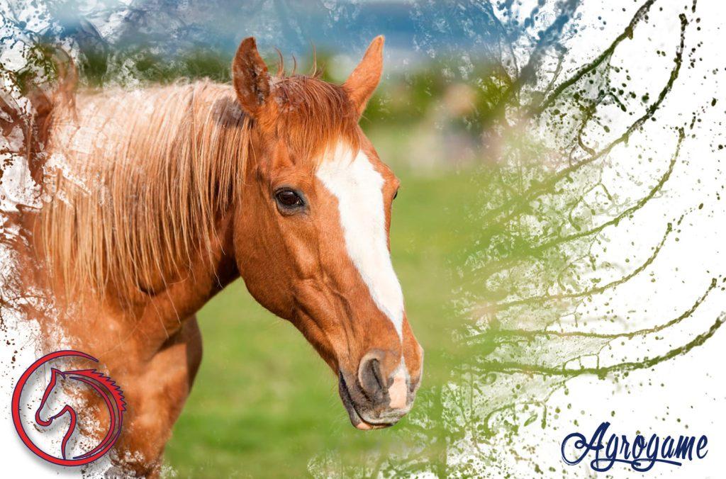 Ejemplos de nombres de caballos famosos