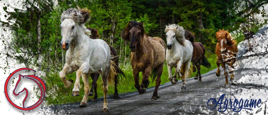 Nombres para caballos y yeguas